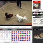 Bermain Sabung Ayam Online Menjadi Hobi Menguntungkan