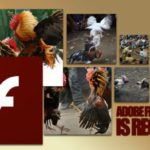 Tips Mengatasi Gagal Login di Situs Sabung Ayam Online S1288