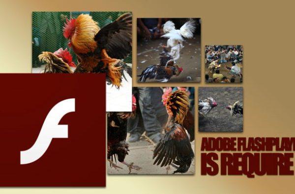 agen sabung ayam, situs sabung ayam, sabung ayam online, gagal login s1288.net, ayam adu online, adu ayam indonesia
