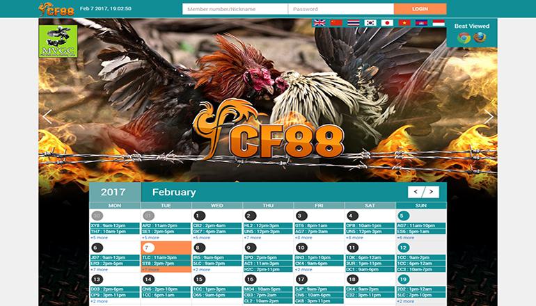 tampilan halaman depan Sabung Ayam Online Cf88