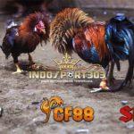 Ayam Bangkok Termahal, Berikut 6 Kandidatnya