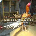 Bentuk Kepala Ayam Bangkok Super
