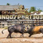 Adu Banteng online Thailand, Game Baru CF88