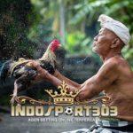 Ayam Terkuat Di Dunia I Agen Sabung Ayam INDOSPORT303