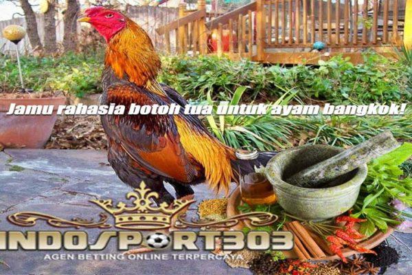 jamu rahasia, ayam bangkok, botoh tua, jamu, tradisional, bahan, obat, stamina, kuat