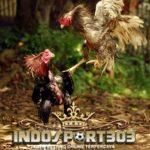 Ayam Bangkok Kuda Lari – Bukan Ayam Birma [VIDEO]