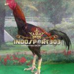 Sejarah Ayam Pakhoy, Ayam Bangkok Pemusnah Setan [VIDEO]