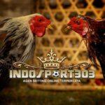 Tips Dan Trik Menang Sabung Ayam Online