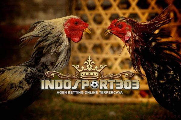 sabung ayam online, agen sabung ayam online, agen betting online, agen betting terpercaya, bandar judi online, menang sabung ayam