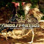 Tips Memilih Ayam Bangkok Berkualitas Juara