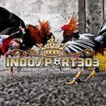 Teknik Bertarung Ayam Bangkok Unggulan