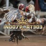 Ayam Petarung Asli Indonesia