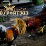Ciri Ayam Bangkok Siap Tempur