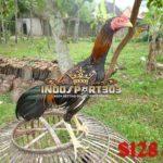 Katuranggan Ayam Bangkok Super F1
