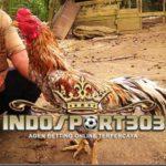 Kenali Ketangguhan Ayam Bangkok Dari Warna Bulu