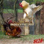 Lima Teknik Bertarung Ayam Bangkok