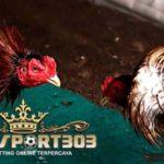 Makanan Penambah Kekuatan Ayam Bangkok