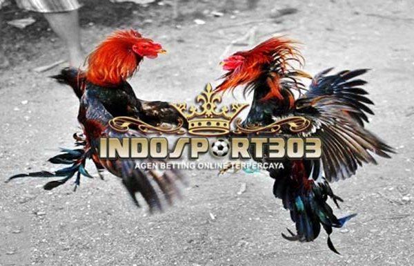 cara menang sabung ayam, sabung ayam online, agen sabung ayam, agen sabung ayam online