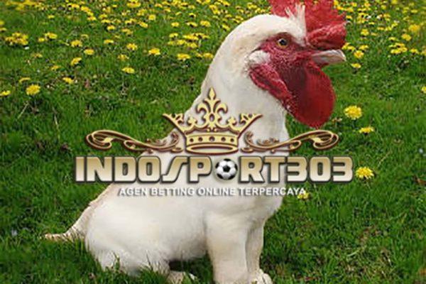 ayam unik, ayam silky, ayam cemani, ayam dong tao, ayam onagadori, ayam telanjang